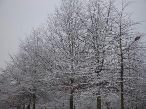 Árboles cargados de nieve